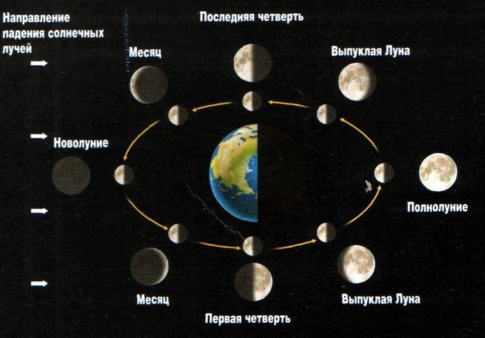 Все самое интересное о луне в знаках: луна во льве